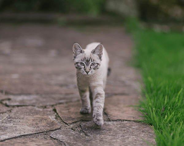 Cica a szabadban