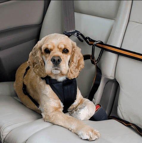 Kutya szállításának módjai költözésnél