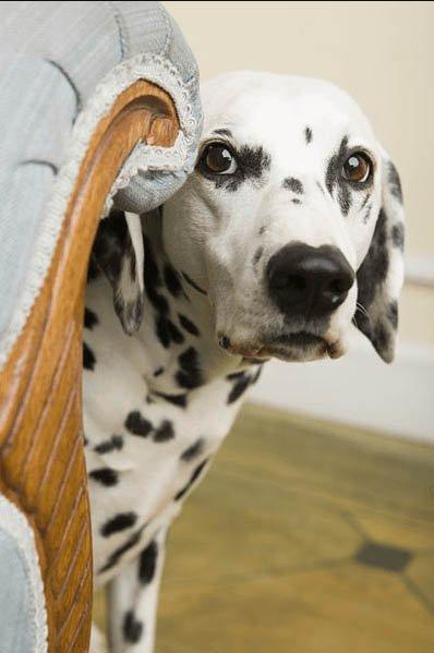 Költöztetés után új környezet kutyáknak