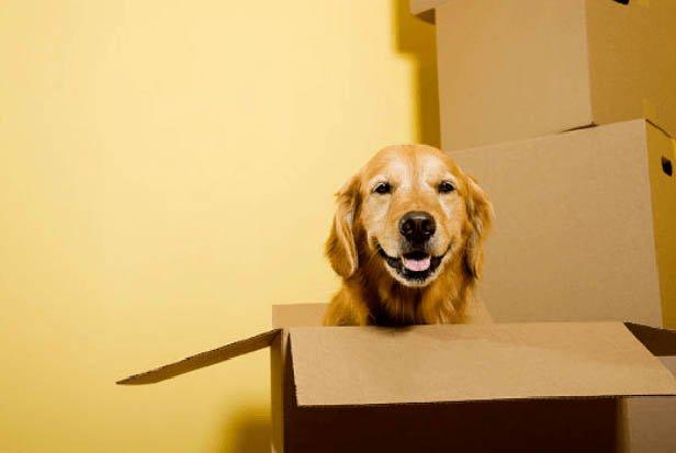 Költözés kutyával - visszuk.hu